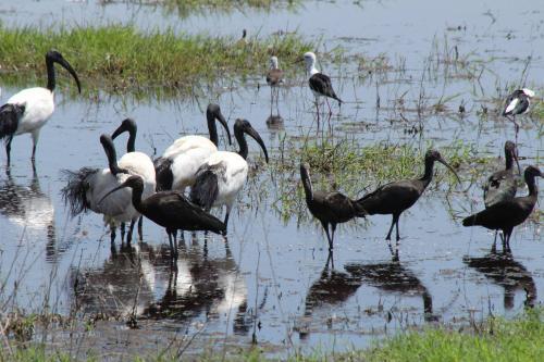 ケニアに飛んでくる渡り鳥
