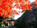 盛岡城紅葉