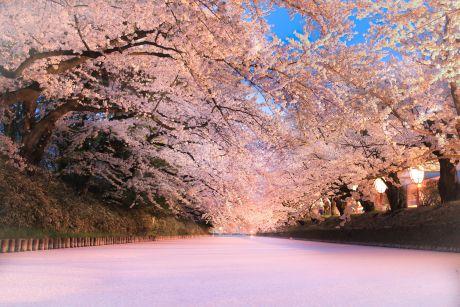 弘前公園花筏