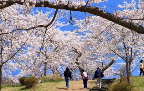 早掛沼公園3