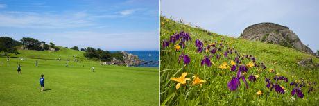 種差海岸芝生と花
