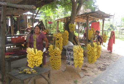 バナナ直売