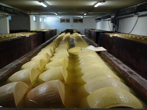 イタリア チーズ工場見学
