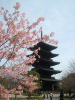 春の東寺 五重塔