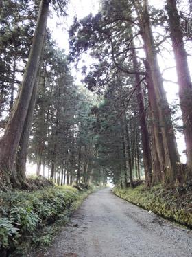 日光杉並木1