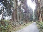 日光杉並木2