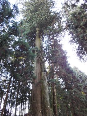 日光杉並木4