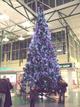 Joulukuusi1_jumbo