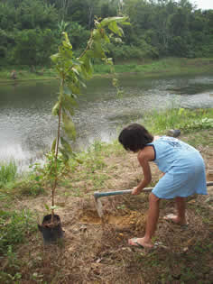 ランカウイ植林プロジェクト