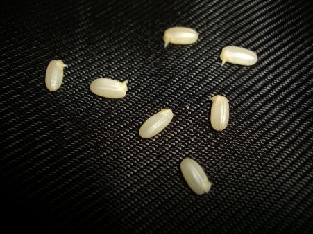 発芽玄米6