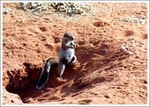 カラハリ砂漠の動物たち1