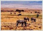 野生の王国・ンゴロンゴロ1