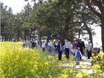 済州菜の花ウォーキング