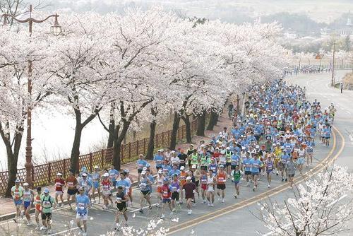 慶州さくらマラソン&ウォーク大会02