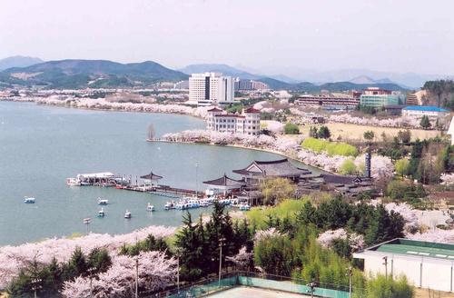 慶州普門湖さくら