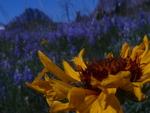 グレーシャーの花
