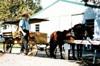 ≪ワイエスの絵画世界とアーミッシュ村を訪ねる旅・7日間モデル日程≫ もうひとつのアメリカを知る旅。今もなお古きよきアメリカの姿が残るアーミッシュ村と合衆国建国の地フィアデルフィアを訪れます。