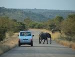 道路を横切る象