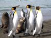【憧れの南極へ】お手軽な9日間クルーズから南極大陸でのアドベンチャーまで、豊富なツアーをご用意しています。