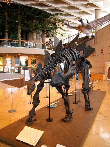 恐竜展01ステゴサウルス