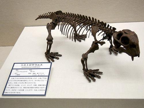 恐竜展04リストロサウルス