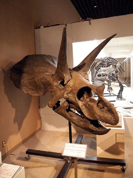恐竜展05トリケラトプス