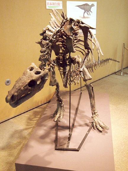 恐竜展08ラブドドン