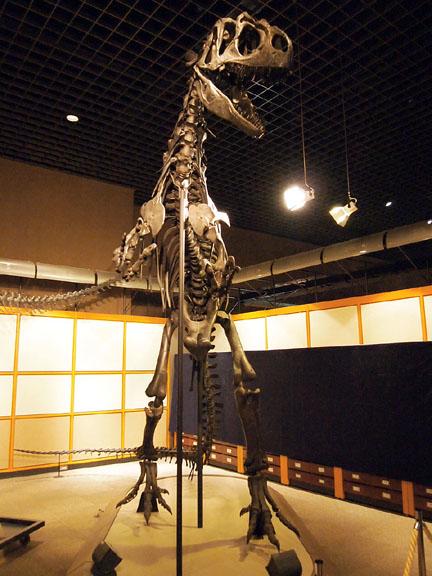 恐竜展09アロサウルス