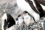 南極半島クルーズ イメージ