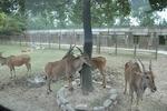 上海野生動物園5