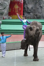 上海野生動物園34