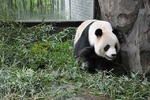 上海野生動物園58