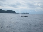 2012初クジラ