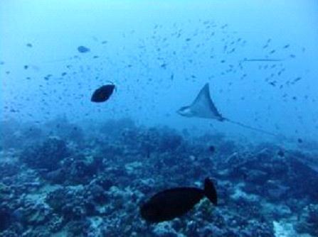 タヒチ ファカラバ島 ダイビング