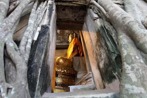 菩提樹の中にある仏像