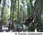 ゴンドワナ多雨林地区