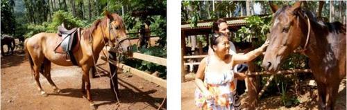 モーレア島 乗馬 2
