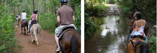 モーレア島 乗馬 3