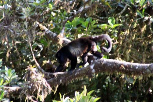 コスタリカ モンテベルデ自然保護区03