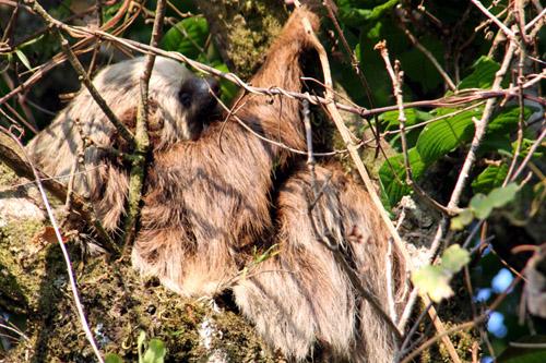 コスタリカ モンテベルデ自然保護区04