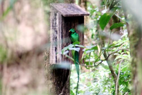 モンテベルデ自然保護区03