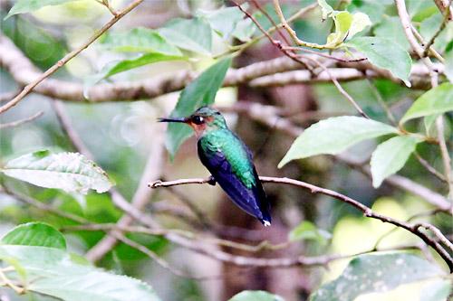モンテベルデ自然保護区05