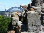 タロンガ動物園3