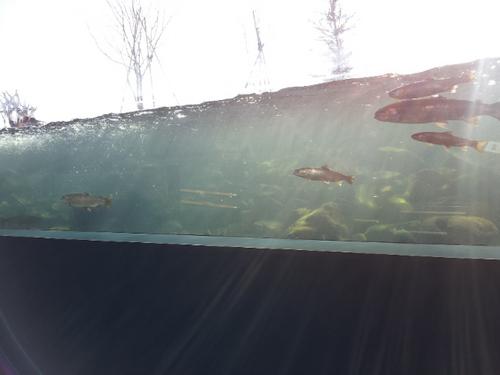 魚道水槽1
