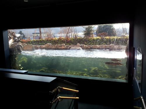 魚道水槽2