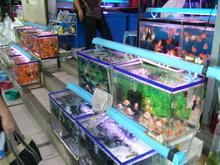 金魚がたくさん