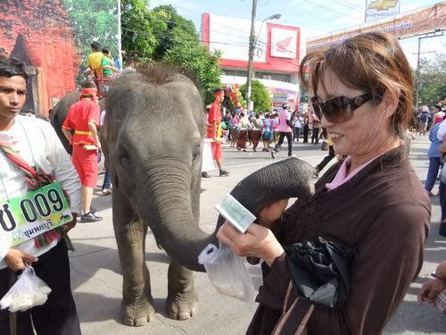 象のフィーディングで触合いも
