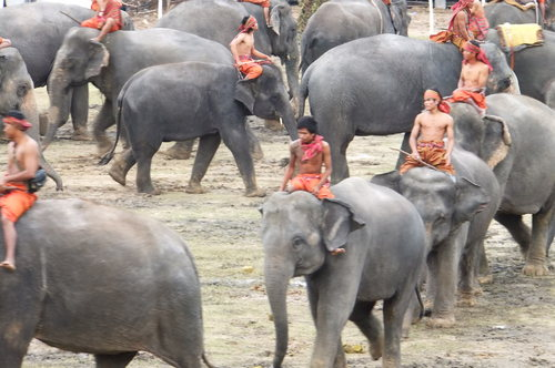 スタジアムに次々と象が入場
