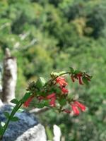 遺跡に咲く花