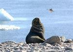 南極クルーズ01